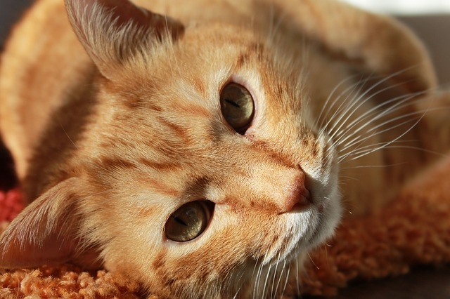 5 Reasons Your Cat Will Love A Cat Sitter